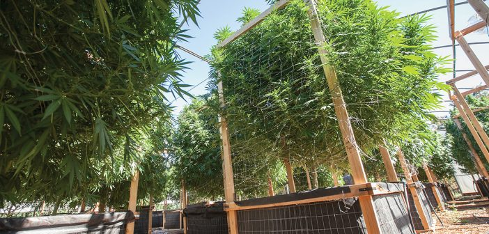 OLCC Public Comments To Bump Up Canopy For Medical Marijuana - RMMCnewsfeed