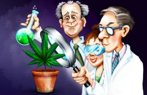 Cannabis Industry News - RMMC Consulting