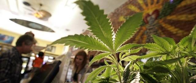 California Cannabis Advisory Committee Applications - RMMCnewsfeed