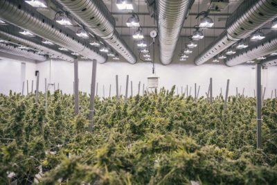 Commercial Medical Marijuana Cultivation