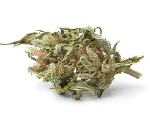 Leafly's Cannabis 101 – Larf